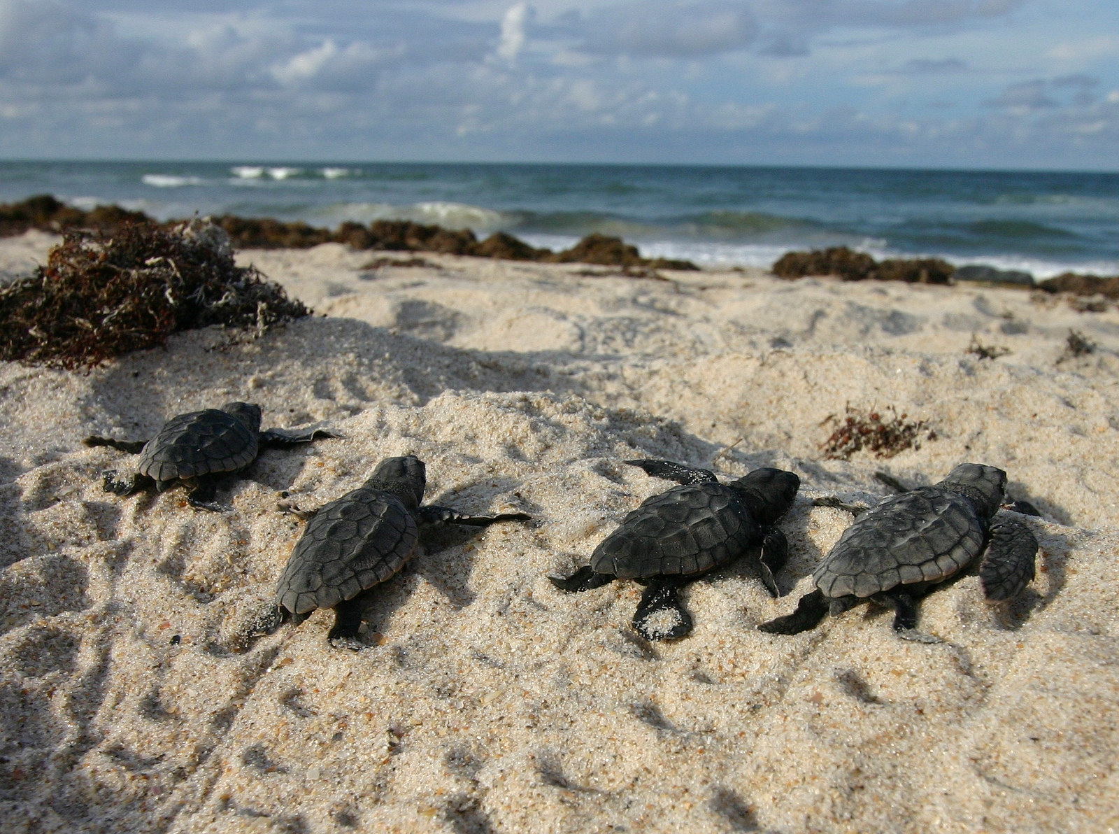 Development On Sea Turtle Nesting Beach